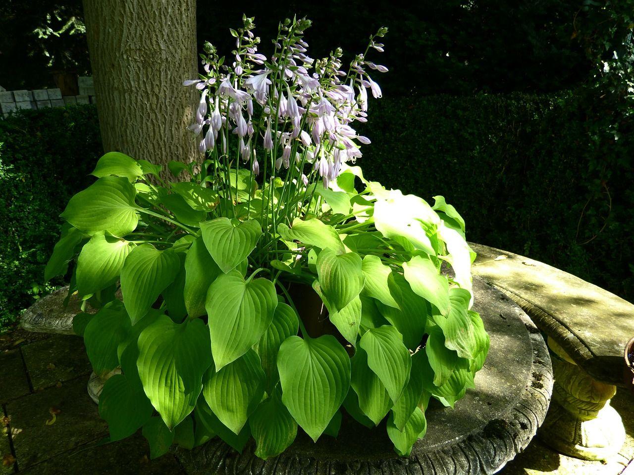 plantas para un jardín con sombra en  | plantas de
