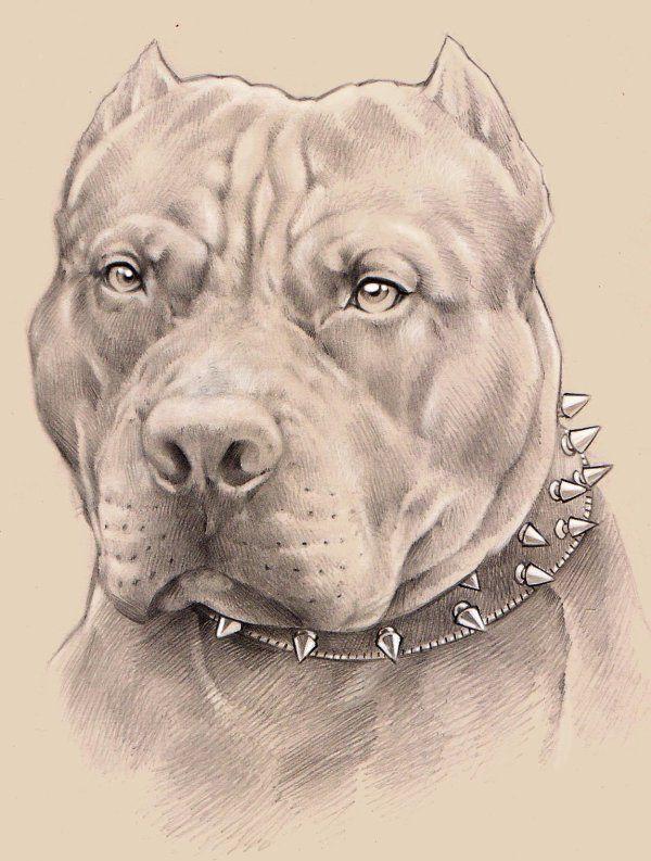 Imagen Relacionada Tatuajes De Perros Pitbull Dibujos De Perros