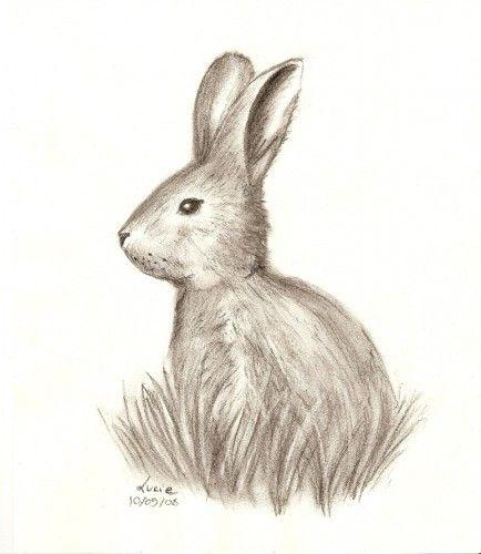 Fonds d'écran Art - Crayon Animaux - Lapins Lapin au fusain