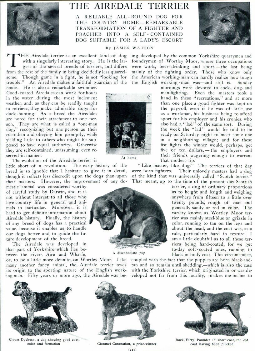 The Airedale Terrier - 1909