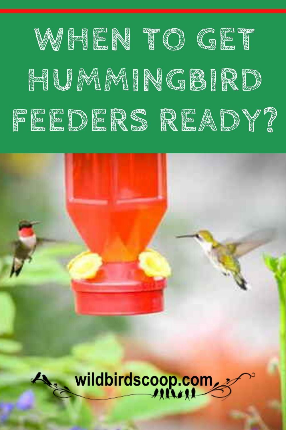 Hummingbird Feeder When Should It Go Out And How Early