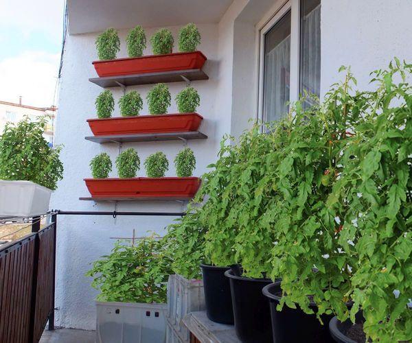 Urban Vegetable Gardening For Beginners: Balcony Garden, Indoor Vegetable