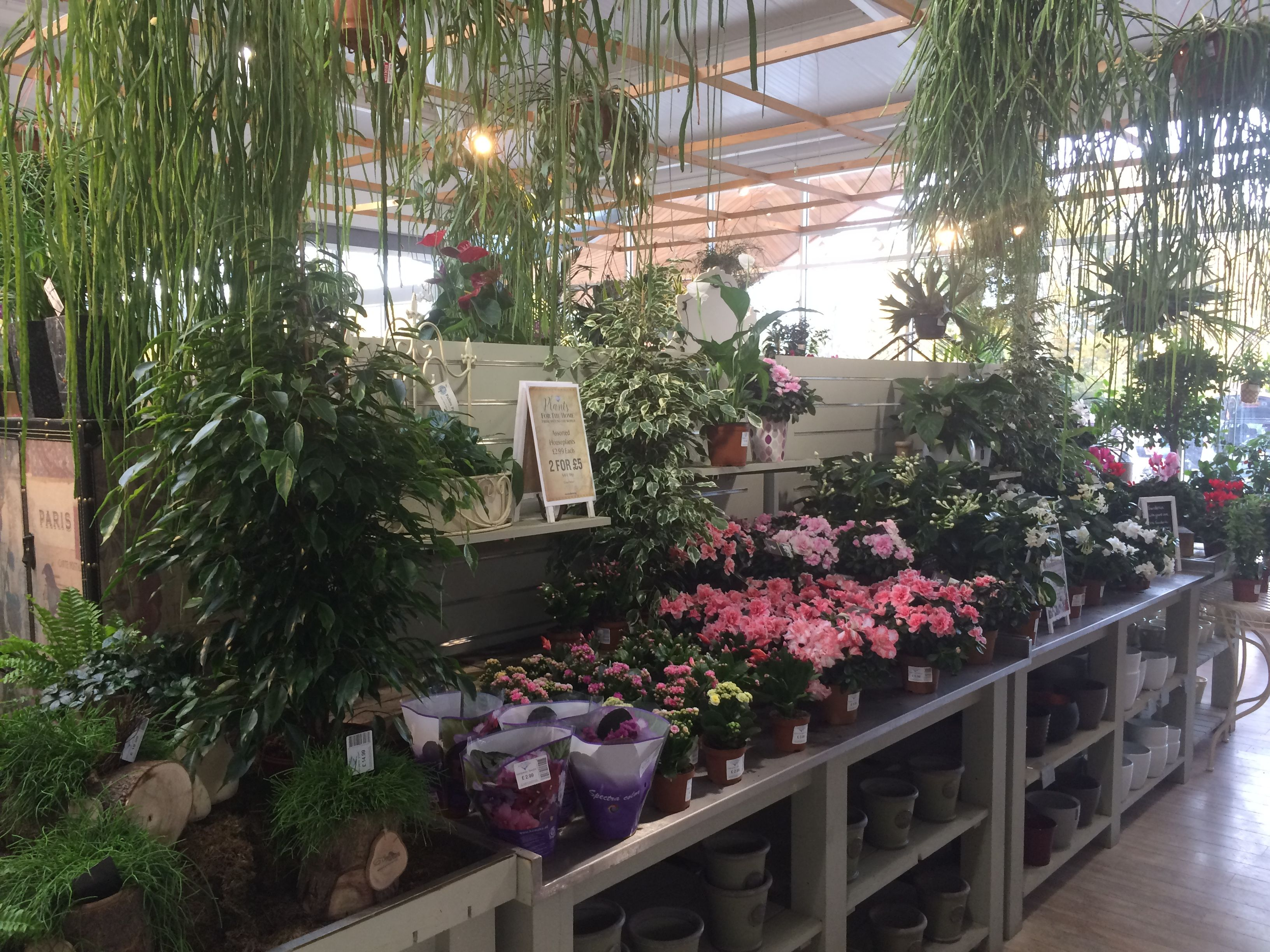 House Plant Display At Redfields Garden Centre Part Of The Blue Diamond Group November 2016 Garden Center Garden Center Displays Garden