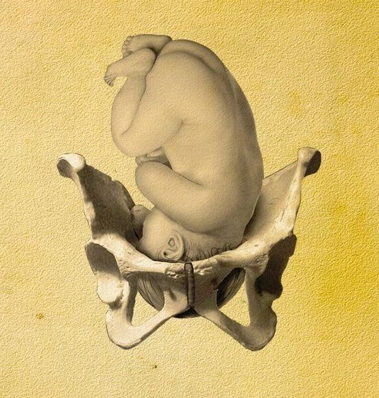Birth canal. | Anatomy (Drawn/Rendered) | Pinterest