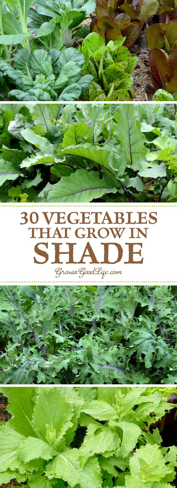 30 vegetables that grow in shade gardens vegetables for Summer vegetable garden