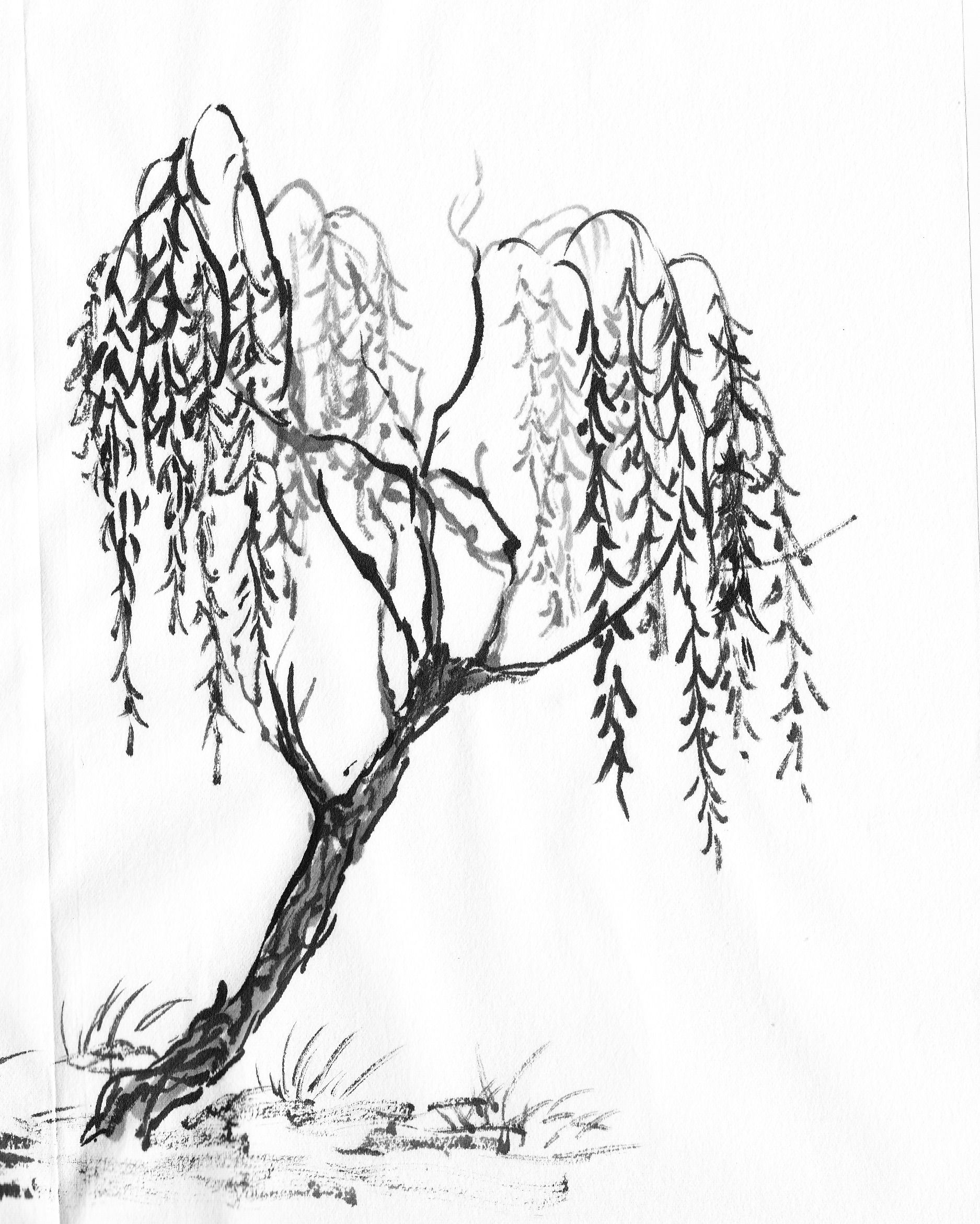 Coloring Page Willow Tree. Willow Tree Branches Drawing Sketch Coloring Page Specific trees  painting tree Tattoo and Tatting