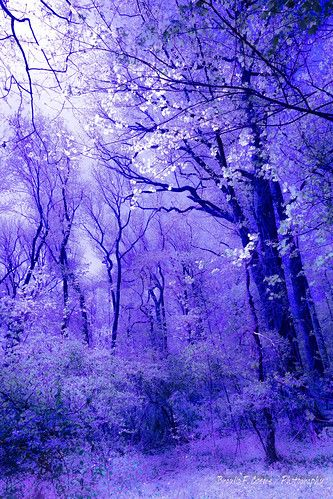 Mistic forest...