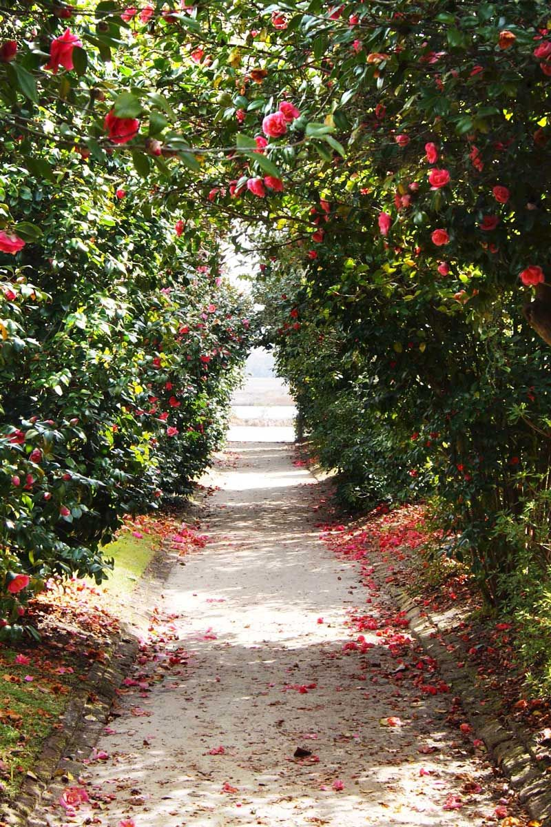 5 plants every southern garden needs gardens an and paths