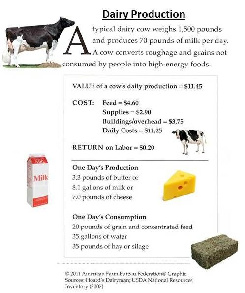 dairy cow facts