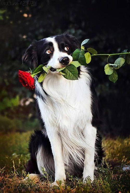 Breed Information Pet Insurance For Dogs Dogs Pets