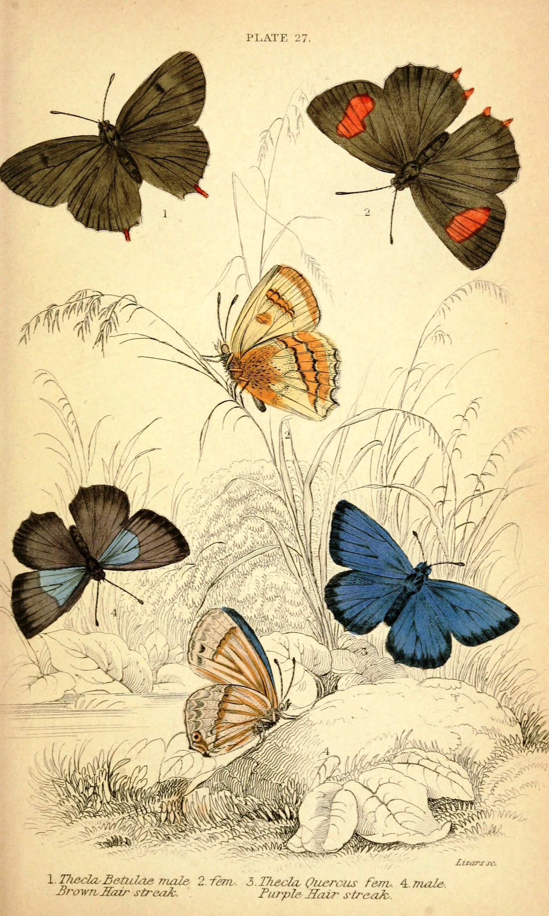 Vintage butterfly illustration | FOTOS PARA TRANSFER | Pinterest ...