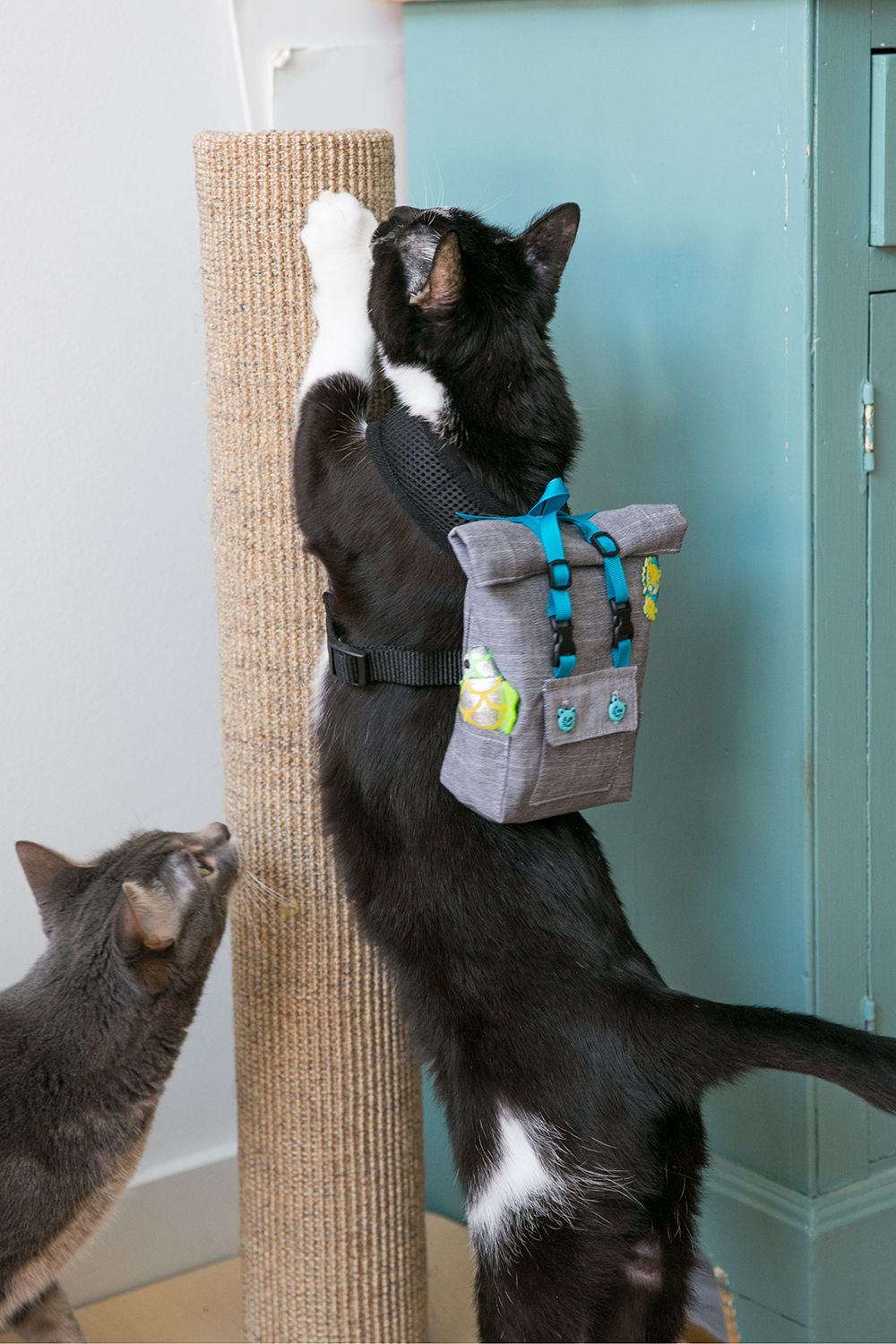 4e05420d54b7 Your cat wants a backpack. No