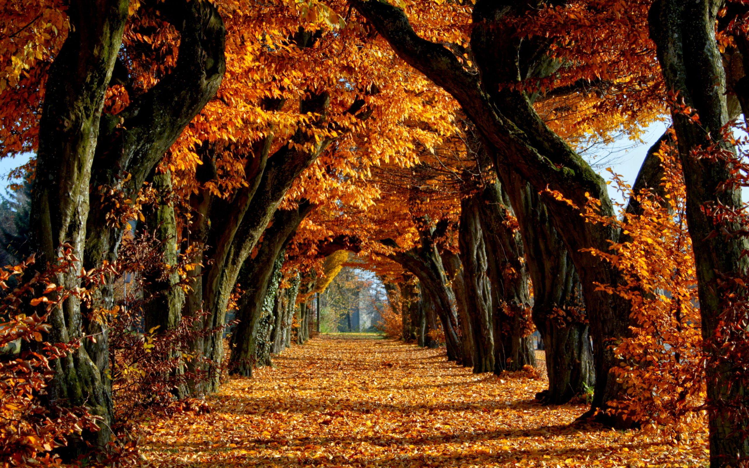 Autumn Autumn Scenery Autumn Wallpaper Hd Scenery Wallpaper