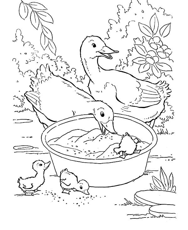 Farm Animal Duck Mother With Their Children Eating In The Washbolw Coloring