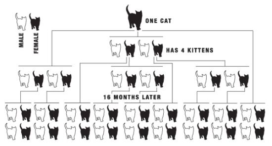 Overpopulation Diagram How Spaying Neutering Can Reduce Suffering