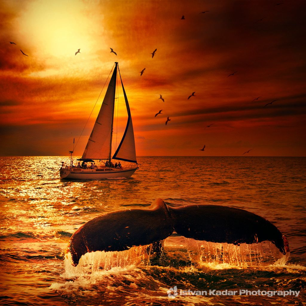 Żeglowanie z wielorybami - zatoka Banderas - Puerto Vallarta