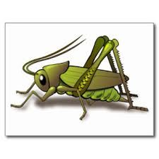 Image Result For Cartoon Cricket Insect Cricket Insect Insect Clipart Insects