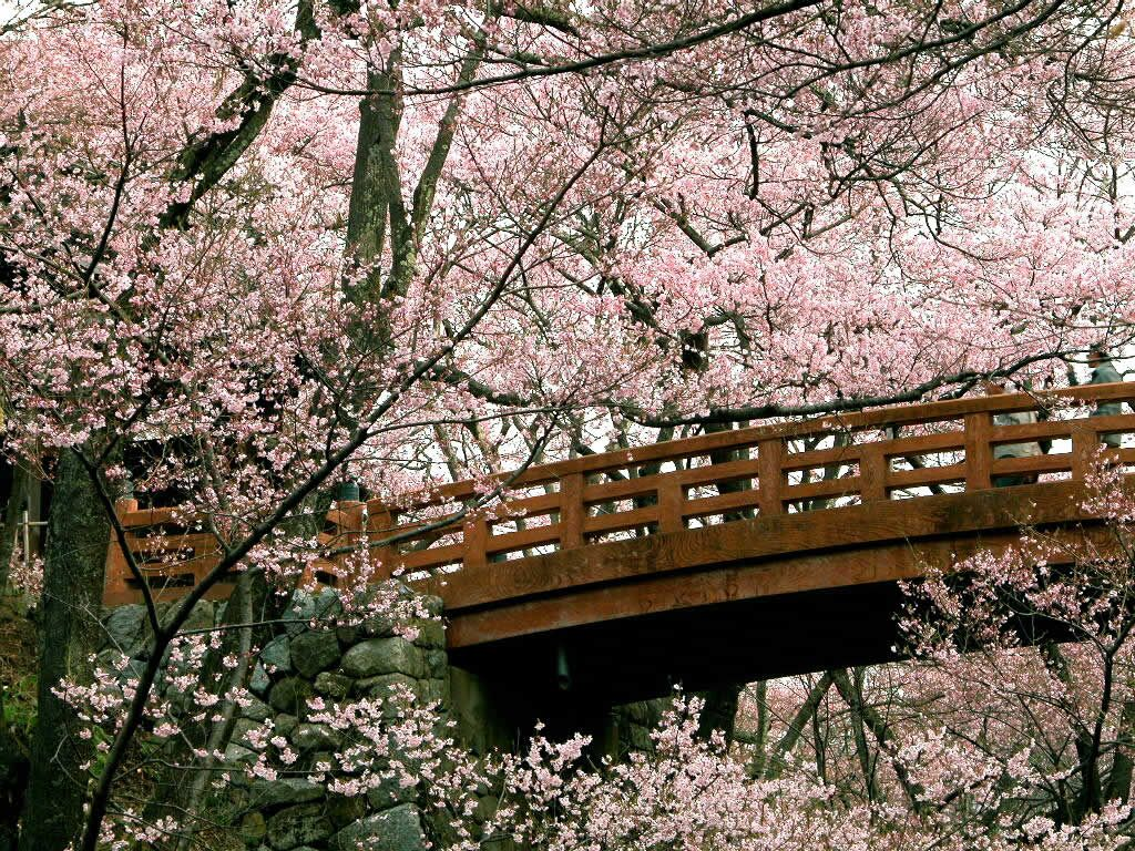 Cherry Blossom Love In 2018 Beautiful Places Pinterest Cherry