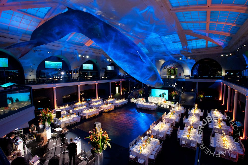 For Some Added Excitement You Can Host Your Wedding Reception Or Event At The American Museum Natural History