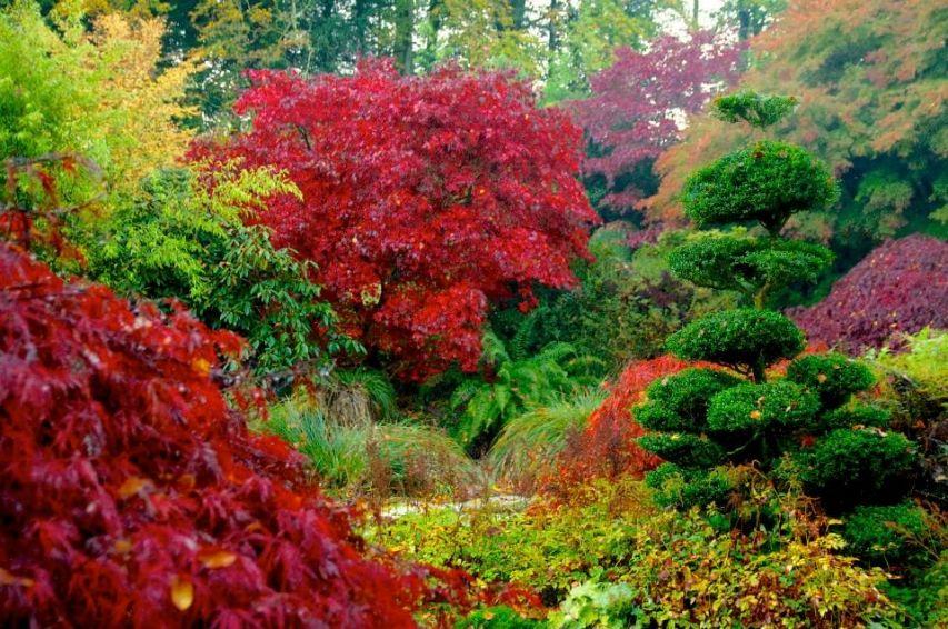 Parc Botanique De Haute Bretagne Parc Botanique Jardin Japonais