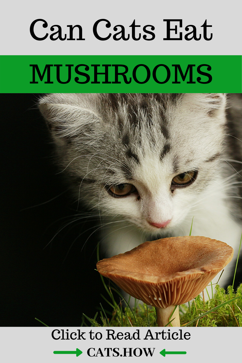 Can Cats Eat Mushrooms in 2020 Cat diet, Healthy cat