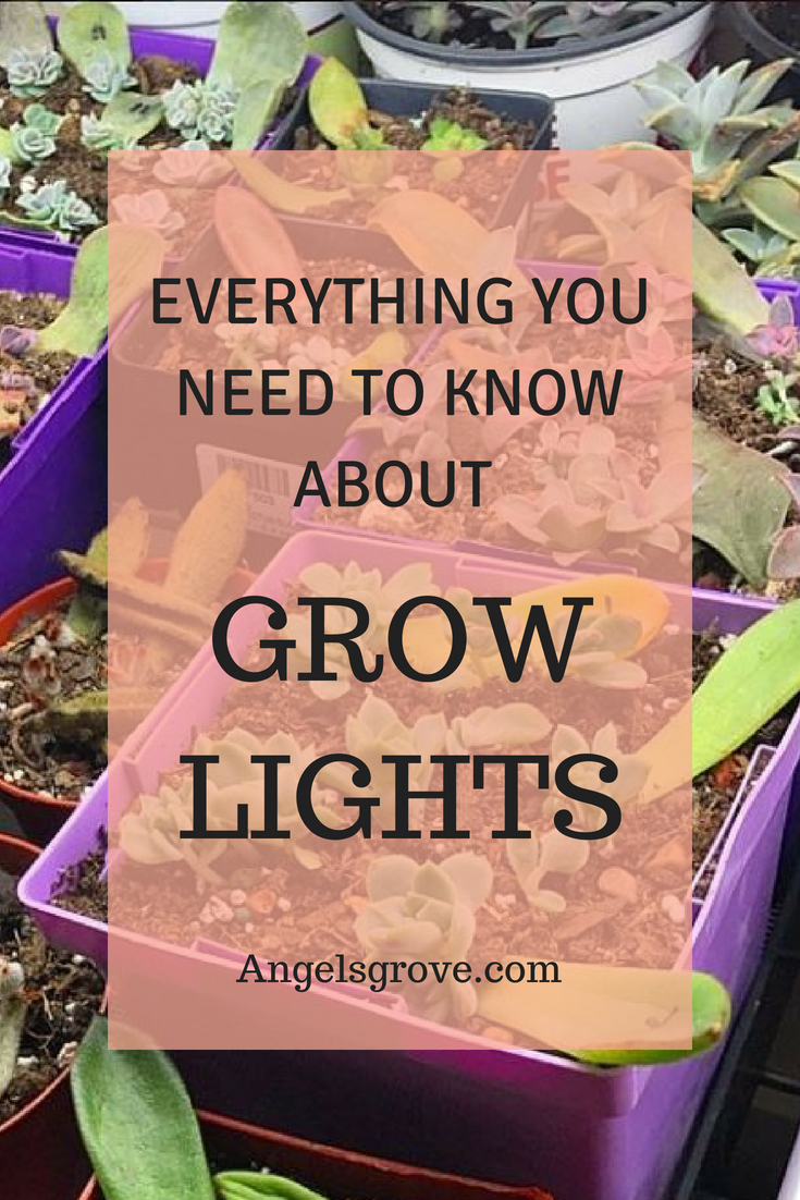 Grow Lights Can Be Expensive And Confusing. This Easy To Understand Guide  Will Help You Make The Best Decision For Your Indoor Succulent Garden!