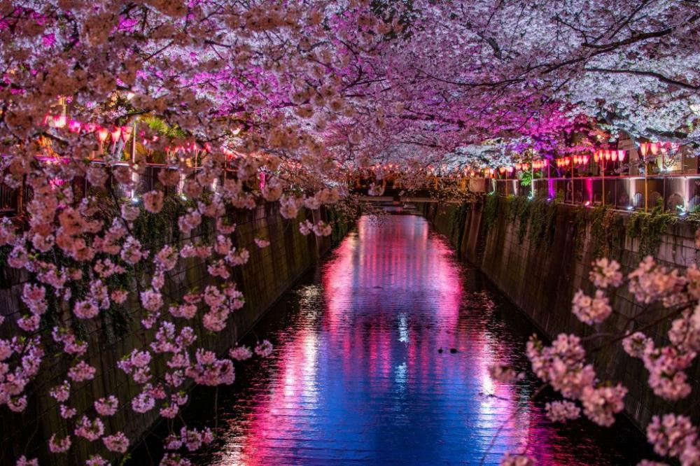 2020 Evening Hanami Cherry Blossom Tour Tokyo Arigato Japan Food Tours Japan S No 1 Food Tour Hanami Cherry Blossom Tour Cherry Blossom Festival