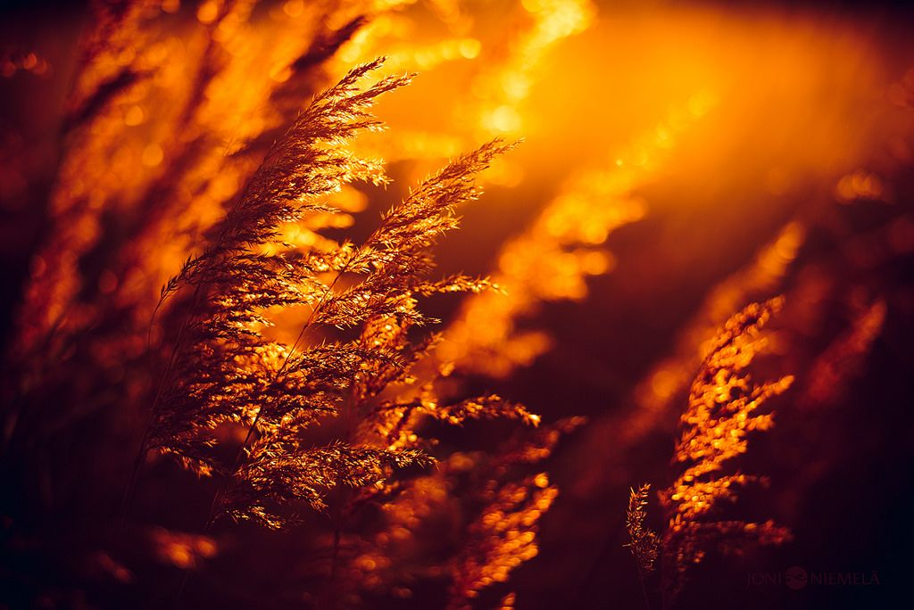 Golden Hays ...