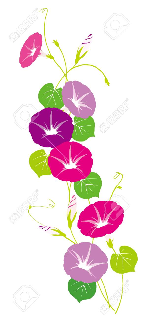 Vector Illustration Of Morning Glory In 2020 Flower Vector Art Flower Illustration Vine Drawing