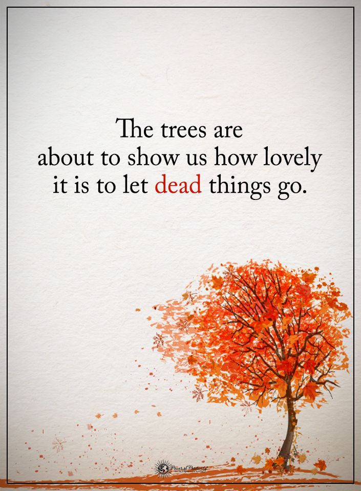 Tree Of Life Quotes : quotes, Trees, About, Lovely, Things, Leaves, Quote., Quotes,, Quotes