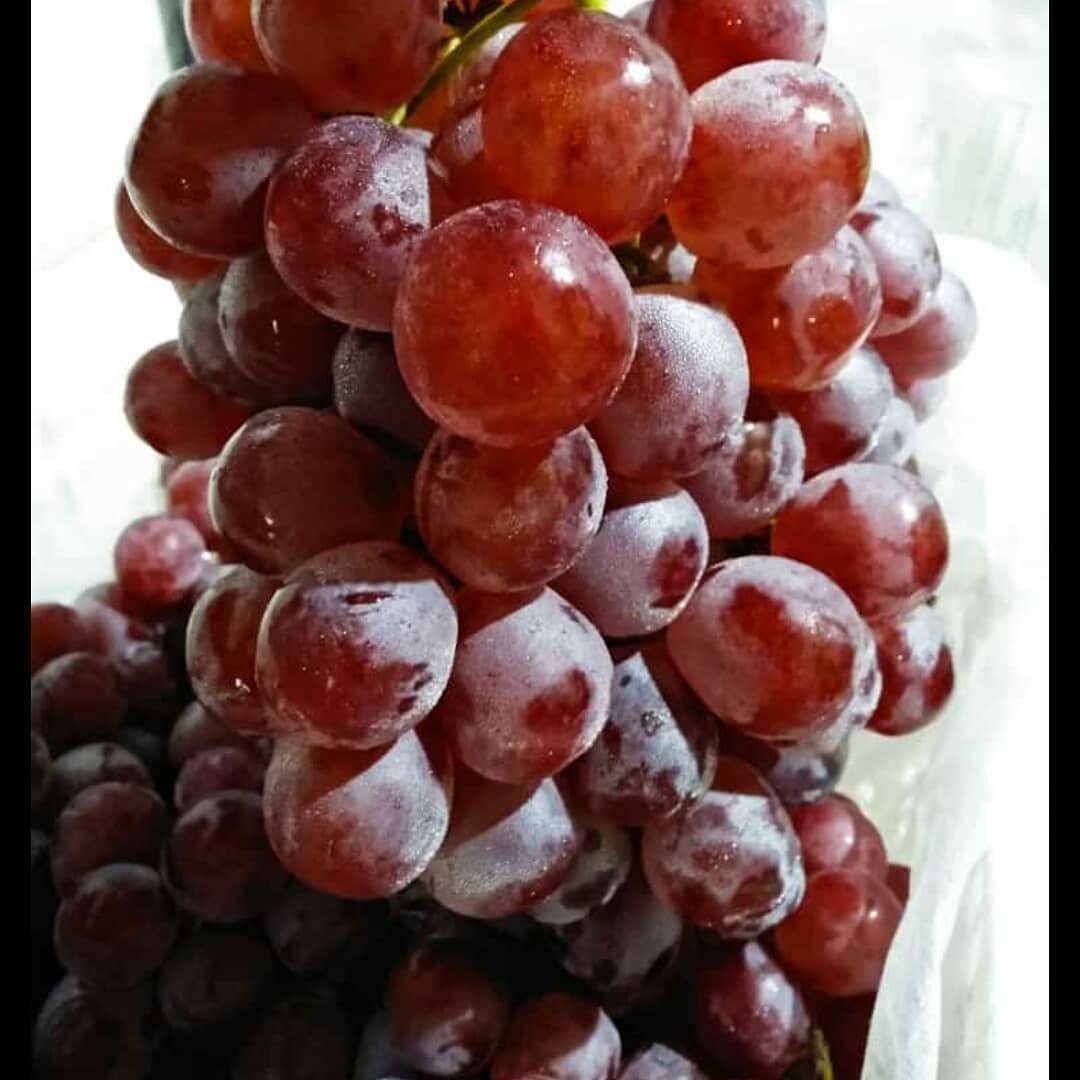 Manfaat Buah Anggur Tubuh