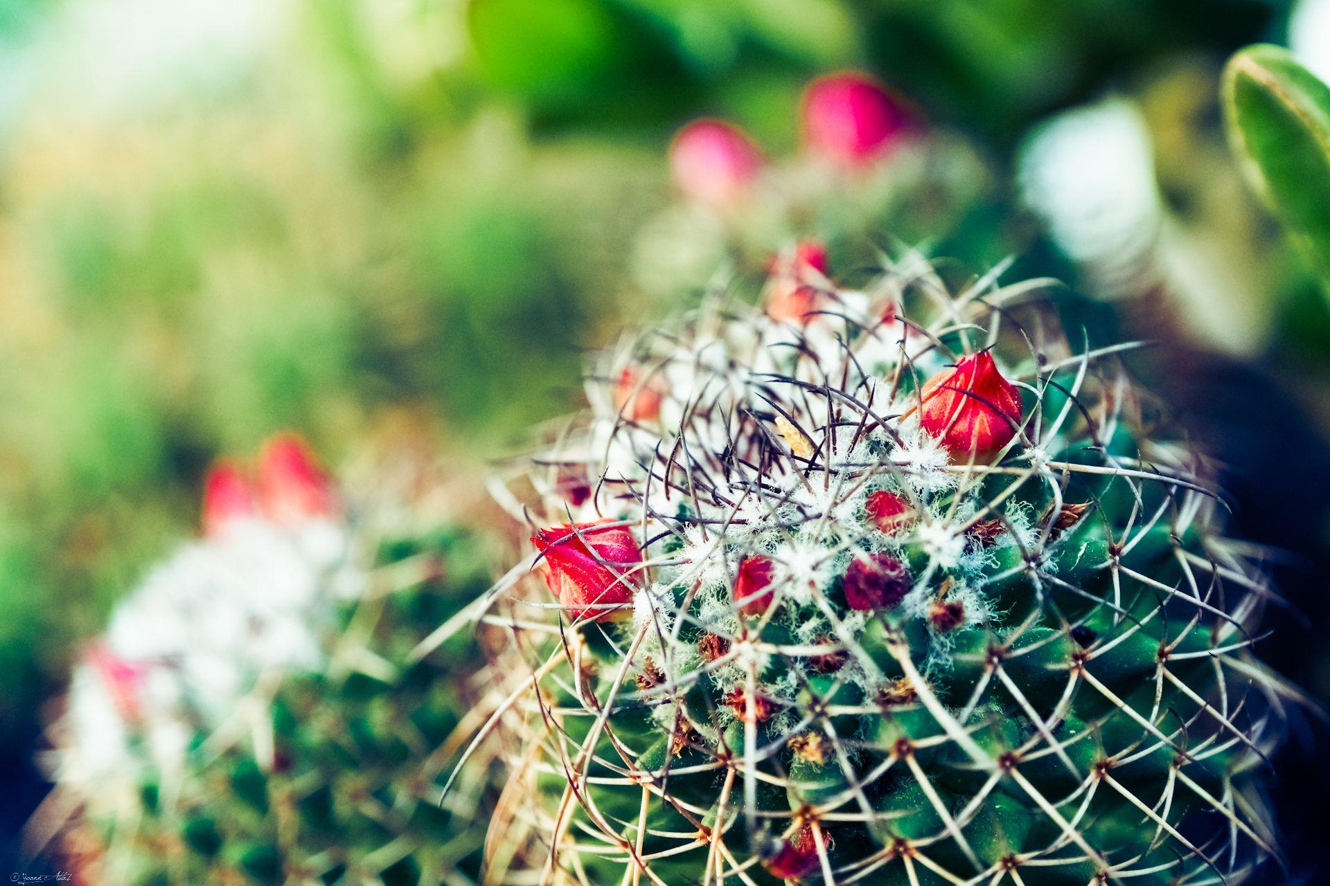 Les Cactus Et Succulentes Ou Plantes Grasses Cactus Pictures