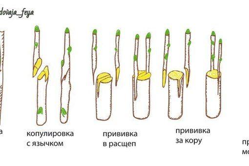 САДОВАЯ ФЕЯ - Дача. Сад и Огород