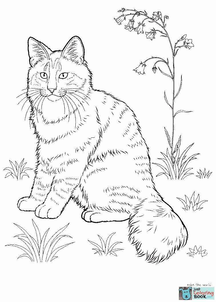 Nyan Cat Coloring Page Youngandtae Com In 2020 Cat Coloring Page Animal Coloring Pages Cat Coloring Book