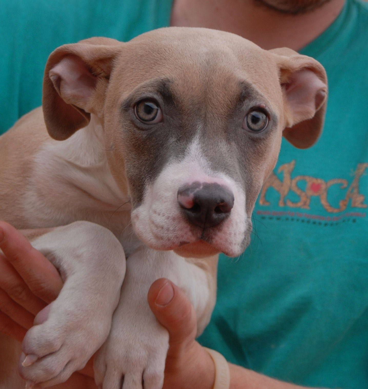 Honey Rose triumphantly debuts for adoption today at
