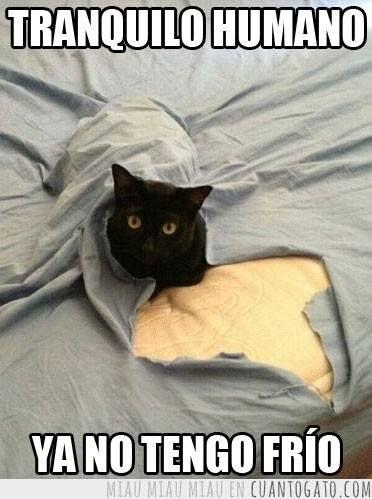 It S Ok Human Funny Cats Funny Cat Photos Funny Cat Memes