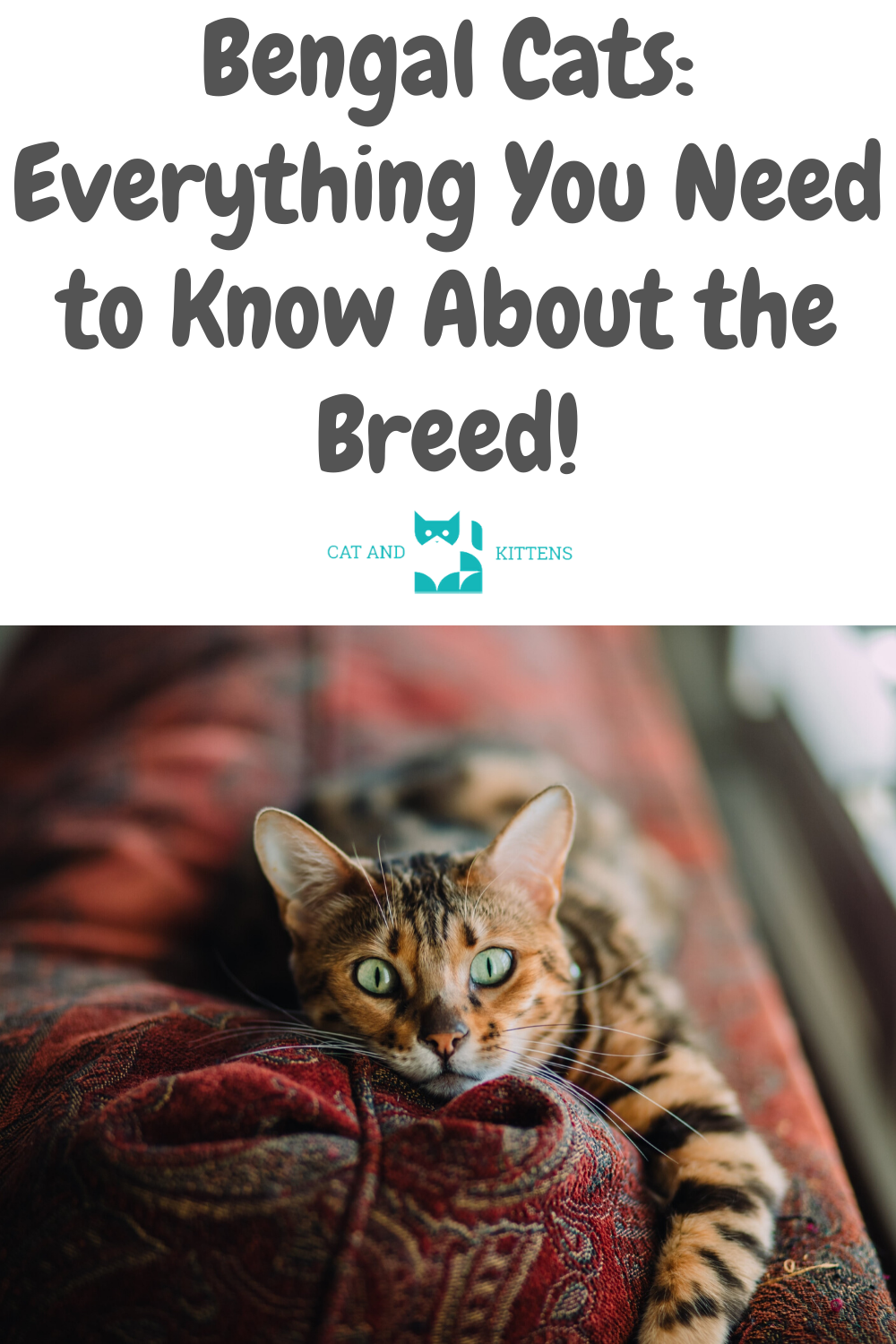 Bengal Cats Everything You Need to Know About the Breed