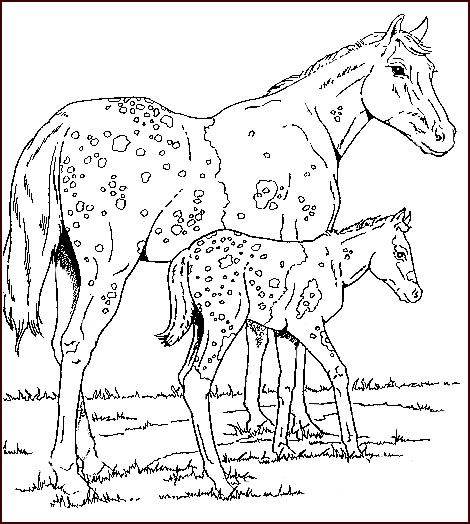 Horses - 999 Coloring Pages AMANDA, THIS IS FOR EMILY!!!! For the - best of welsh pony coloring pages
