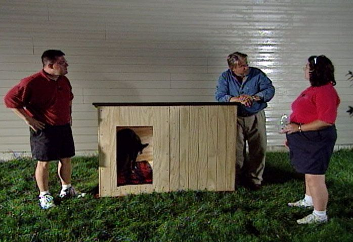 Build A Custom Insulated Dog House To Pamper Your Pooch