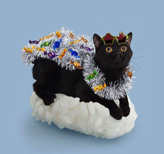 Sushi Cat Atypique Co 2 Neko Chat Habille Chats Adorables