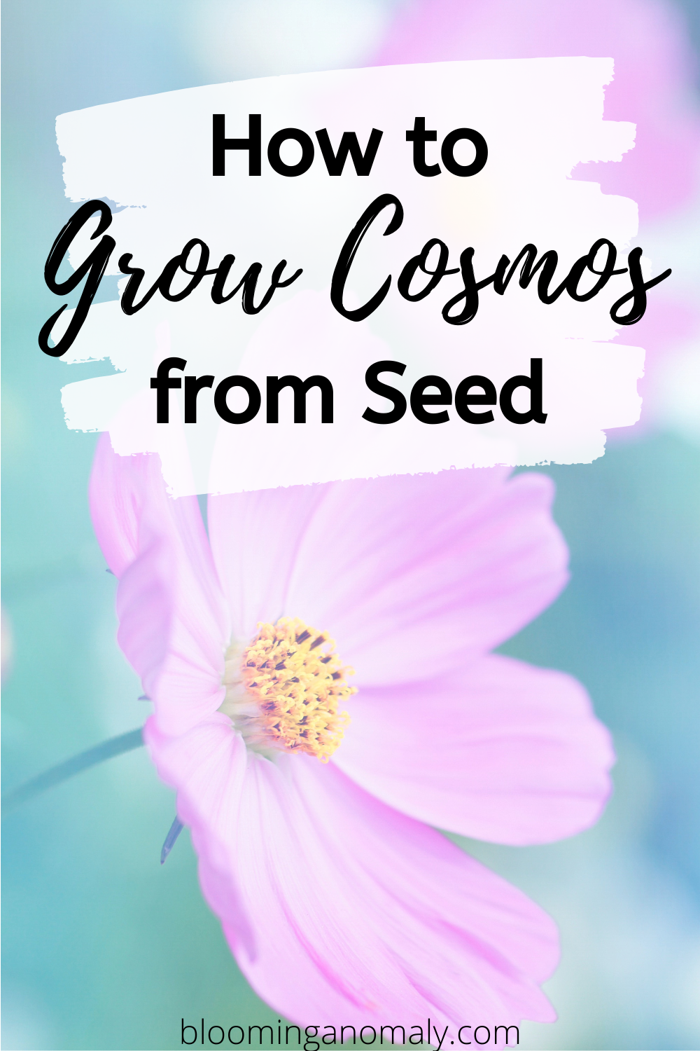 How To Grow Cosmos From Seed In 2020 Cosmos Flowers Easiest Flowers To Grow Gardening For Beginners