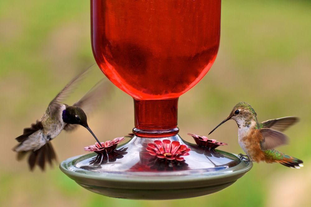how to clean hummingbird feeder audubon