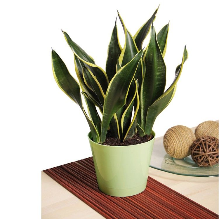 How Often Do You Water a Snake Plant — HGTV Low light