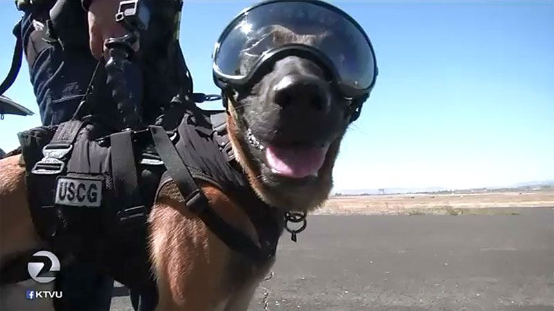 K 9 Coast Guard Units Undergo Special Helicopter Training With
