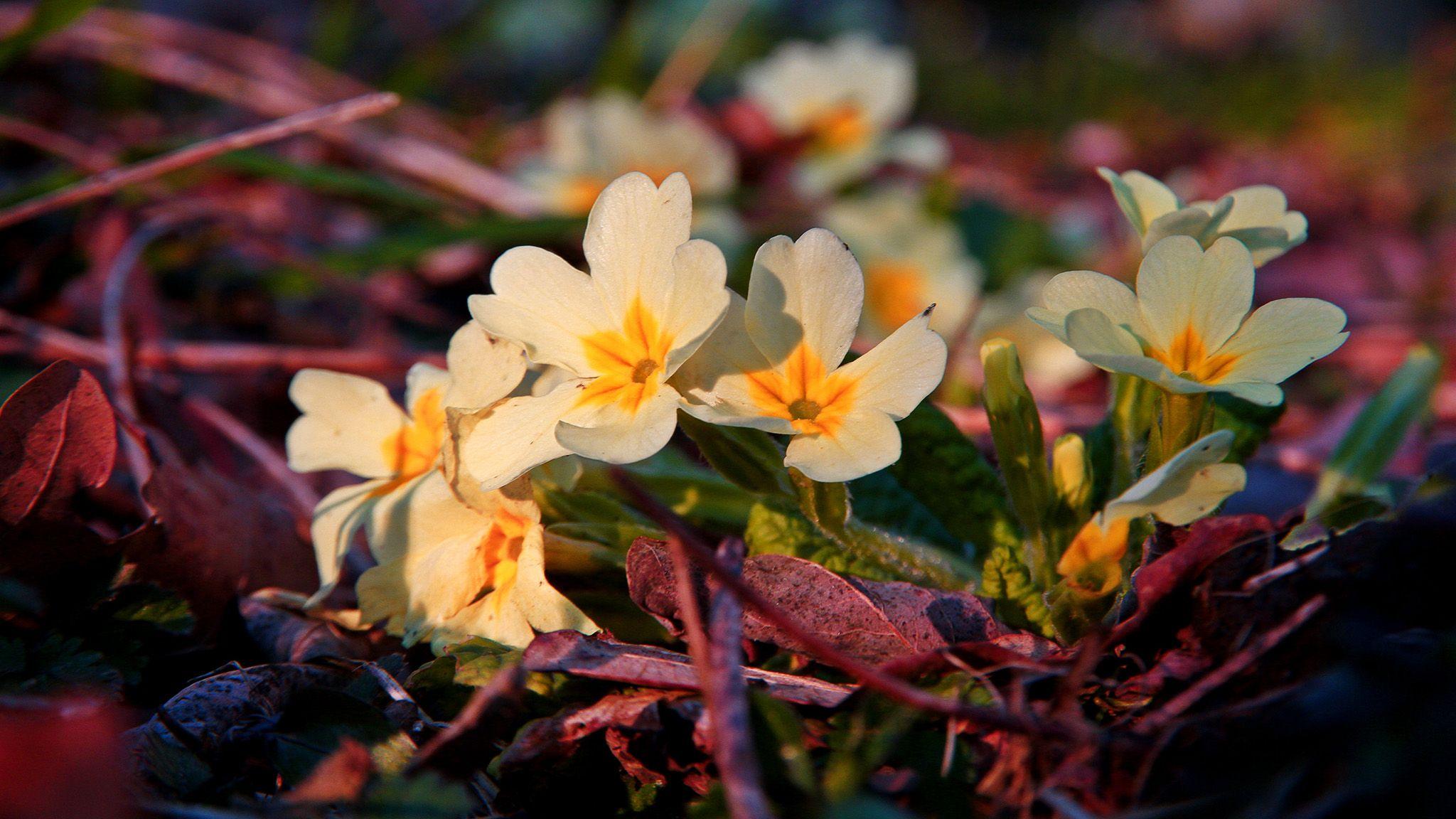 Happy Spring Equinox :-D  Buon Equinozio di Primavera :-)