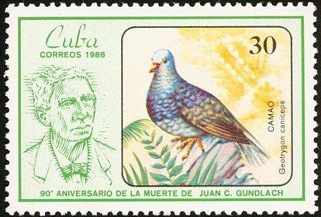 Grey-fronted Quail-Dove stamps - mainly images - gallery format