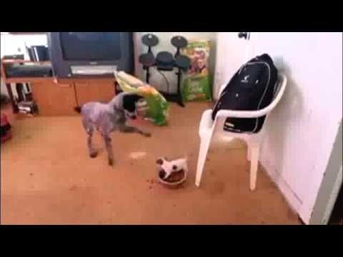Puppy Defending His Food Bowl Worth The Click Through To Watch