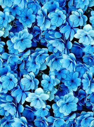 Tumblr Flowers Căutare Google Foto Pinterest Blue Feeds
