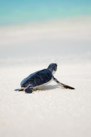 It Doesn T Matter How Slowly You Go Turtle Wallpaper Sea Turtle Wallpaper Sea Turtle Pictures