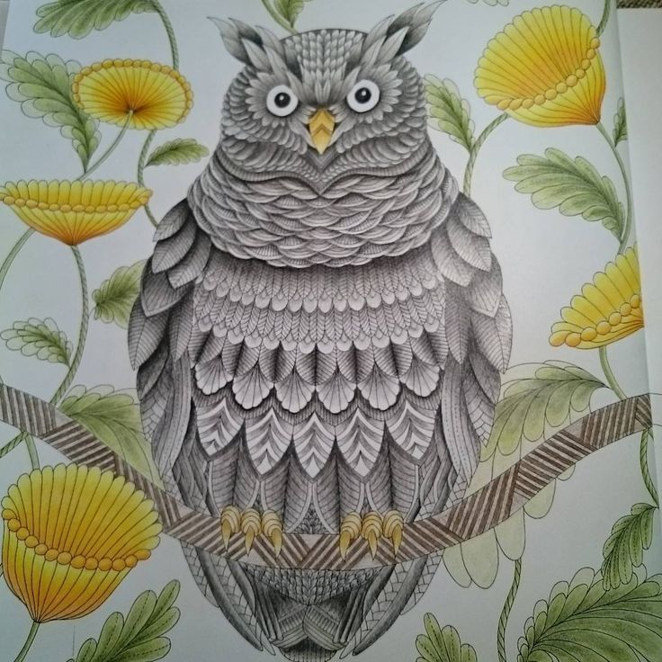 Coloring Ideas Owl
